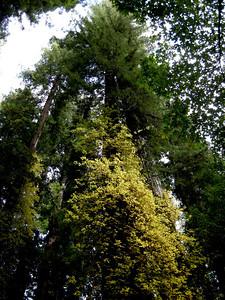 OMIGOD>  THAT! is poison oak, the yellow stuff