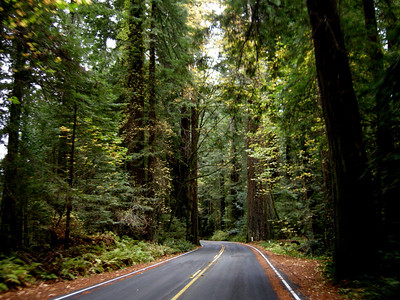 the Avenue of the Giants