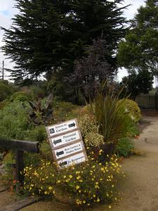 off for a walk through the Mendocino Botanical Gardens