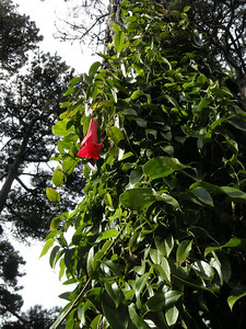 one lonely red flower