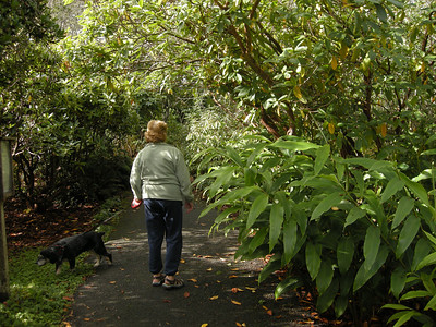 ginger plants and huge rhododendrons