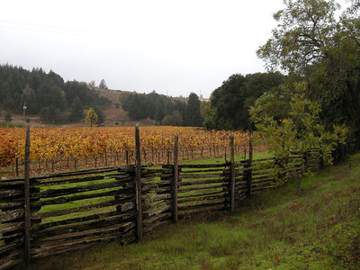 the vineyards in the Anderson Valley are turning