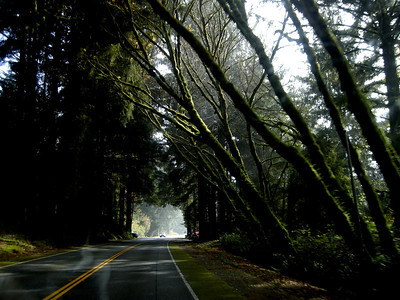 beautiful trees covered with moss on Highway 101