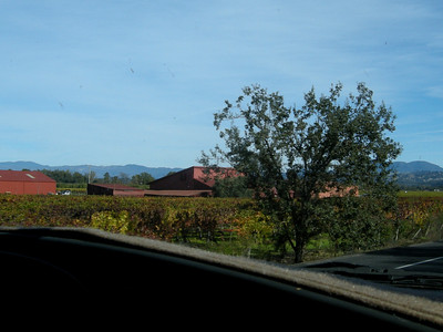 vineyards everywhere in Sonoma County