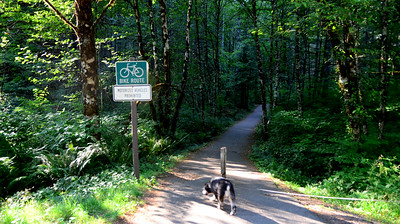 great trails in this park and some are dog friendly