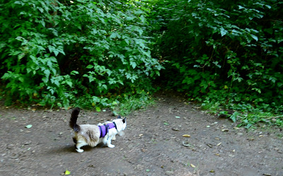 of course he is immediatly heading for the tiny trail