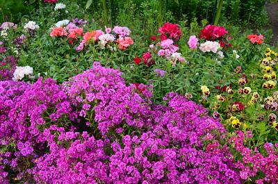 Alaska flowers all seem to be triple size