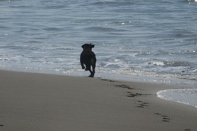 Abby learns to get her ball in the ocean