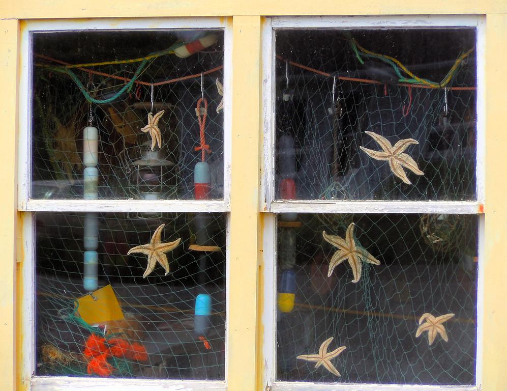 Starfish Window