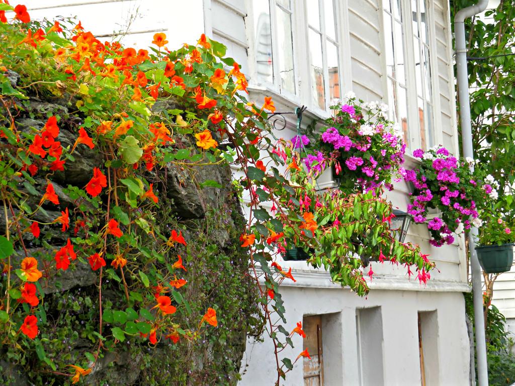 Stavanger Flowers, Norway