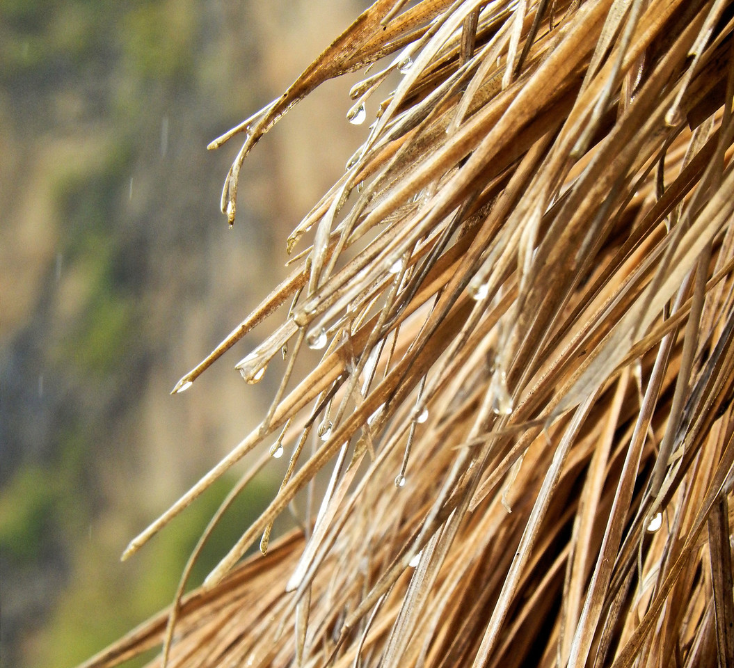 Rain Drops on Coconut Thatch
