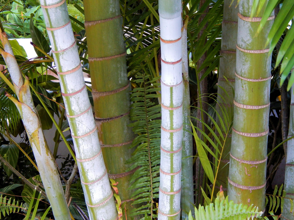 Palm Trunks