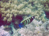 Whitsundays - underwater at either Hook or Hayman Is.