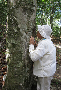 Olga smelling a very aromatic Copal Tree. Used to make perfumes.