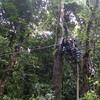 Evan - Tarzan jumping