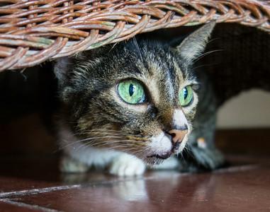 Villas Nicolas cats