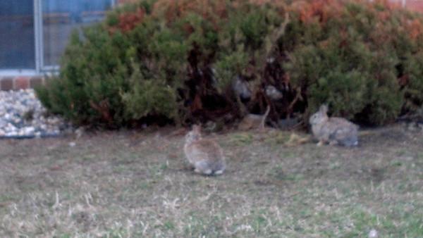09_Little critters