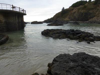 16_Cobble Beach tidepools