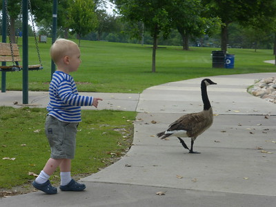 Otto chasing a goose at the City Park.