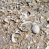 Ancient seabed - everything was covered with shells