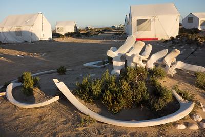 Whale bones in camp