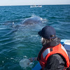 Jan facing a mother gray whale