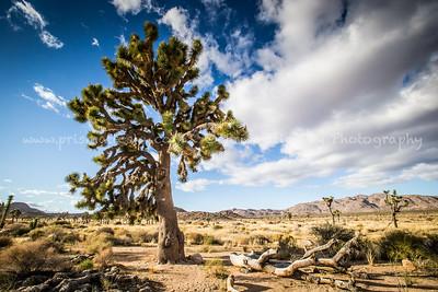 Fall in Joshua Tree