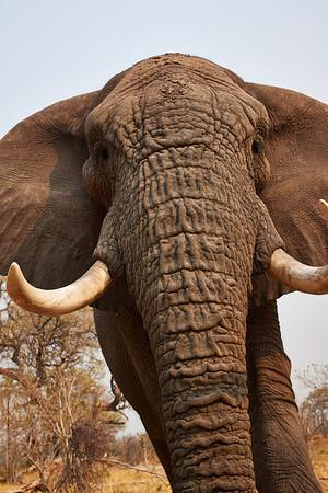 Elephants Africa 2013