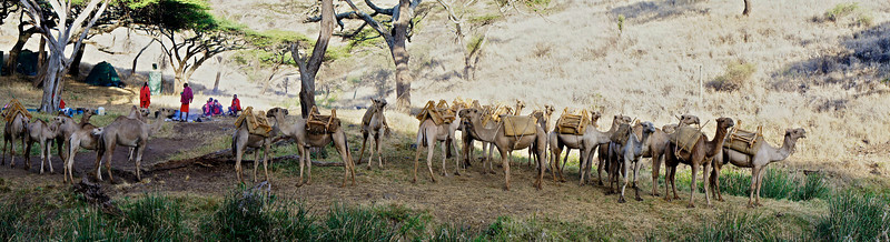 Our camp and the supporting camels.