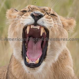 Masai Mara_20150809_0630_Copy 1