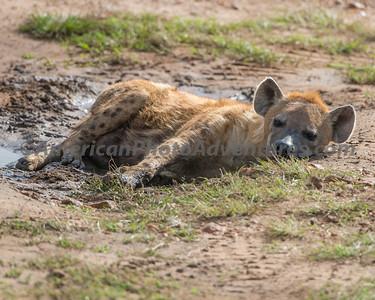 Masai Mara_20150809_0435_