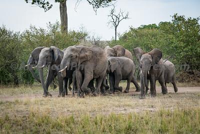 Masai Mara_20150809_0549_