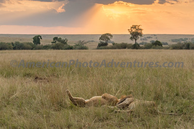 Masai Mara_20150809_0760_