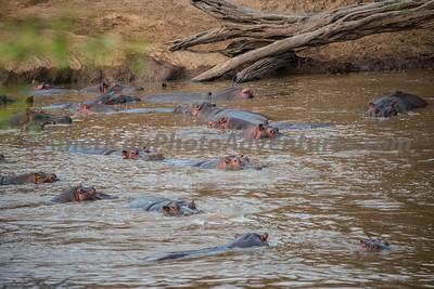 Masai Mara_20150809_0013_