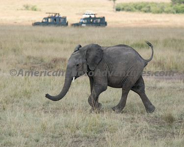 Masai Mara_20150809_0530_