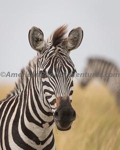 Masai Mara_20150809_0412_