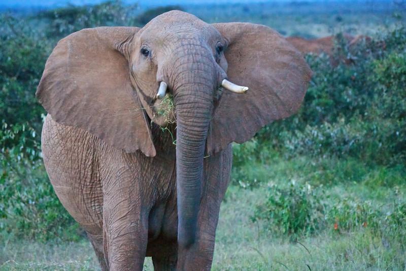 Elephant # 2