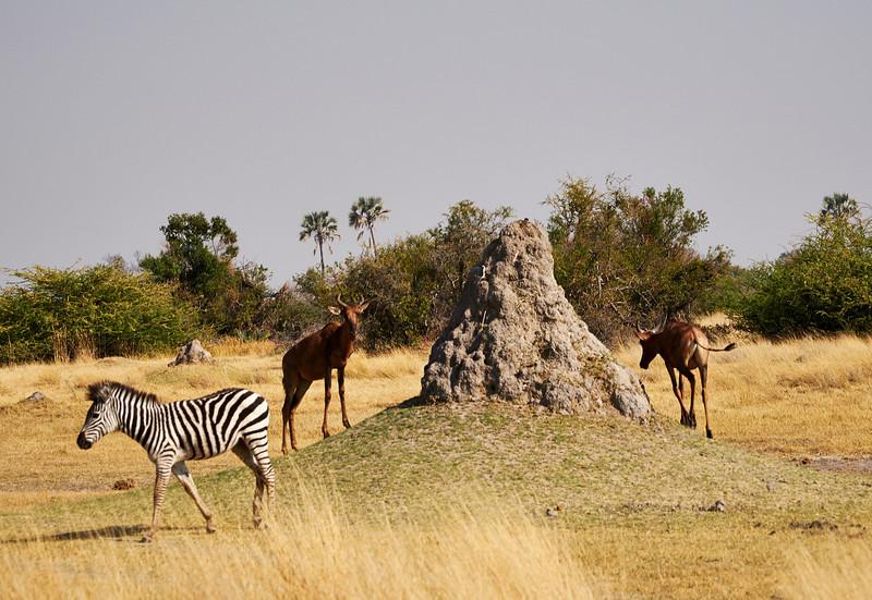Zebra and Antelope near Termite mound