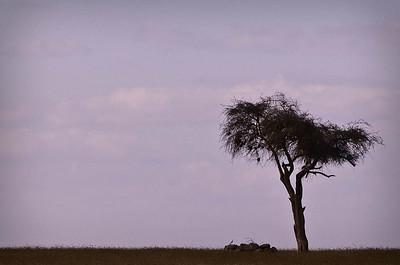 Uganda-7984