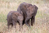 Baby Bush Elephant and Guardian