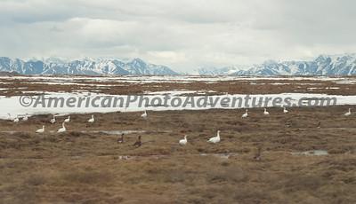 Alaska 2010-AK1-0484