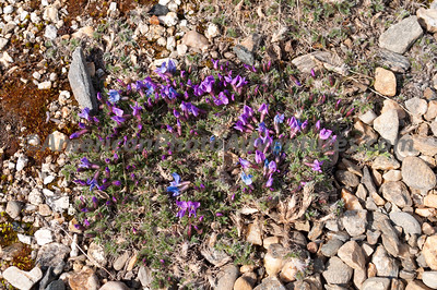 But 2 days later on the return trip they were blooming everywhere.