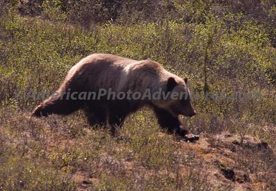 Alaska 2010-AK3--0011