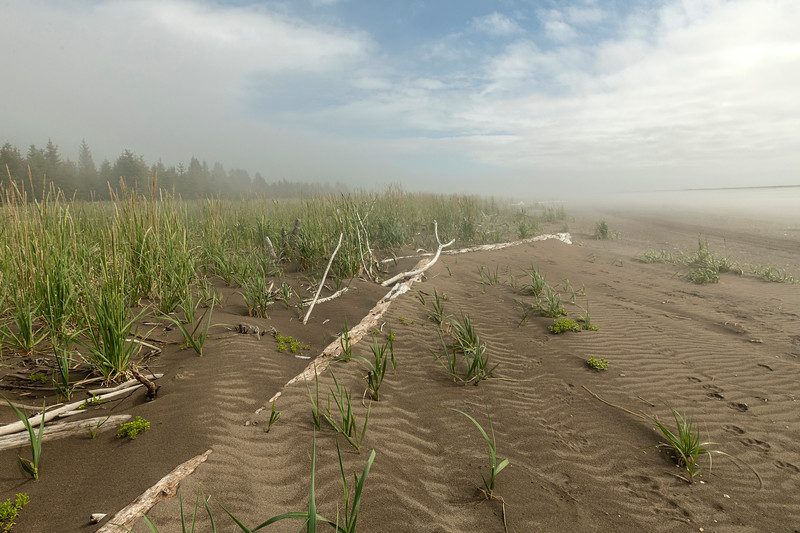 Driftwood and Sedges on Cook Inlet