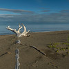 On the beach at Cook Inlet
