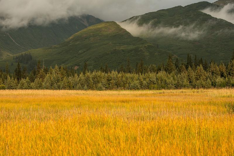 TRAK-13-2: Sedge Meadow at Lake Clark National Park