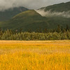 TRAK-13-2: Sedge Meadow at Lake Clark National Park