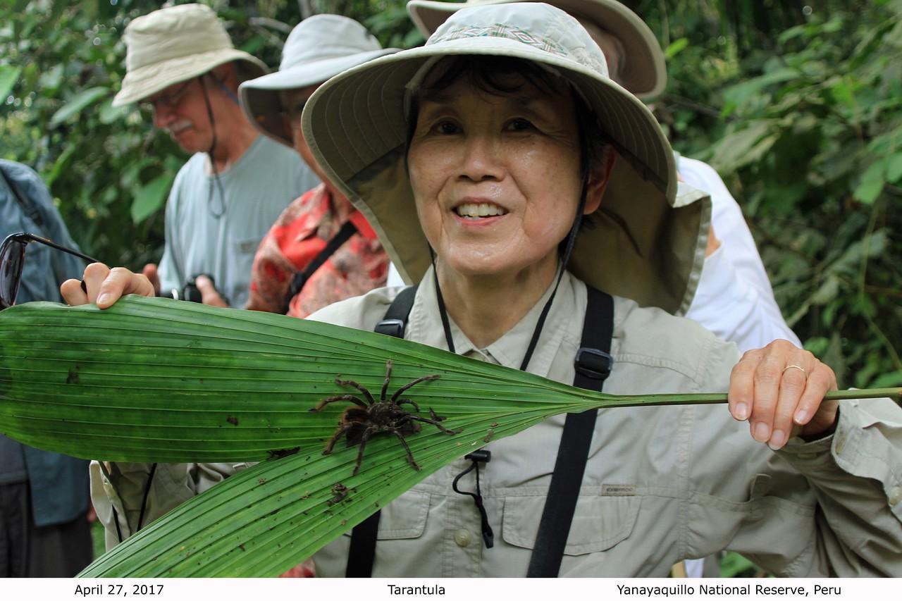 Karen with Tarantula - Jungle Walk