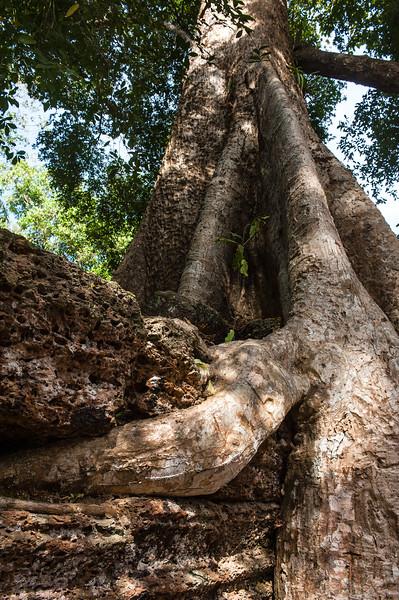 cambodia3_201