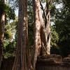 cambodia3_183